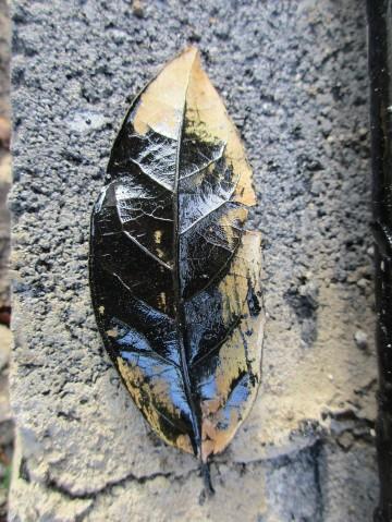 Paint on Leaf II