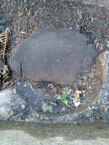 Wood & concrete circle